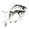 三島湖 石井釣舟店
